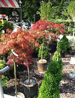 Plant Nursery In Williamstown Nj